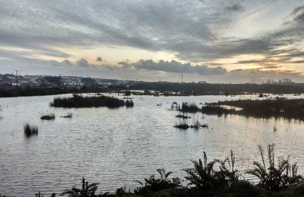 CORTE SUPREMA ACOGE RECURSO DE PROTECCIÓN Y ORDENA MEDIDAS DE PROTECCIÓN DE HUMEDAL EN PUERTO MONTT | Abogados en Puerto Montt - Estudio Jurídico - Abogados de Puerto Montt